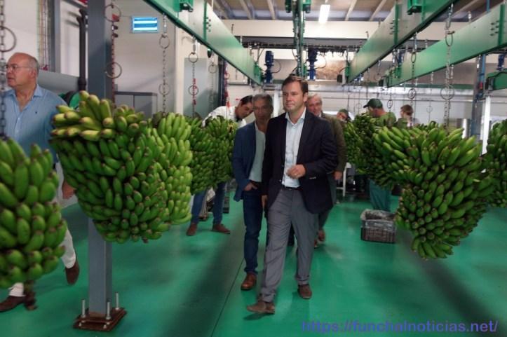 Banana CDS 2