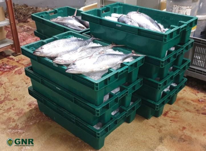 GNR Madeira - Apreensão de atum 5 de julho