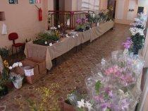 Exposição de orquídeas do Orquidário Lumani (foto Agnaldo Montesso 09-10-2018) (13)
