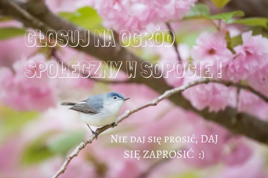 Ptaszek wśród różowych kwiatów zachęca do głosowania na ogród w sopocie