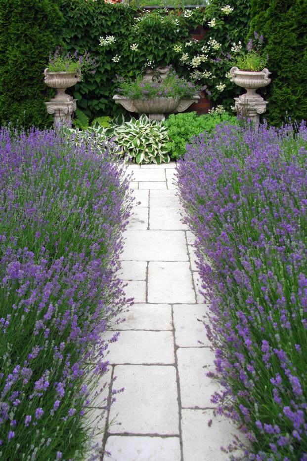 lawendowa dróżka w ogrodzie pracowni sztuki ogrodowej, która zaprojektuje nasz ogród społeczny w Trójmieście