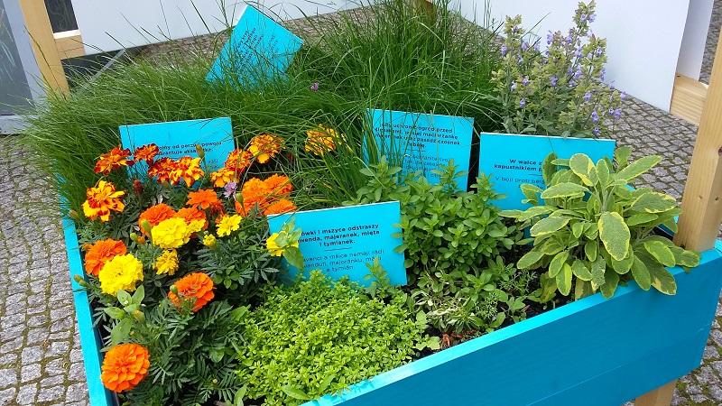 Sprytne rozwiązania na małą przestrzeń – ogród społeczny w Cieszynie