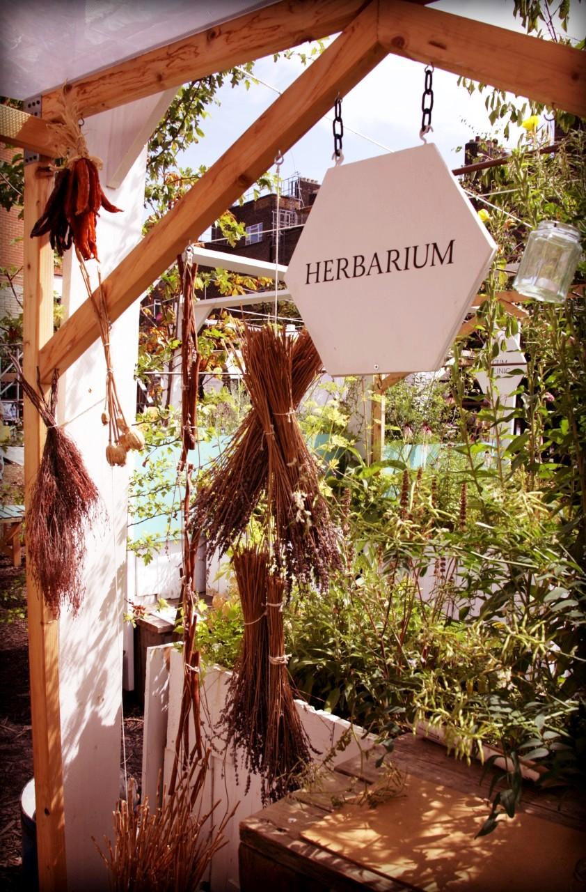 herbarium w ogrodzie społecznym