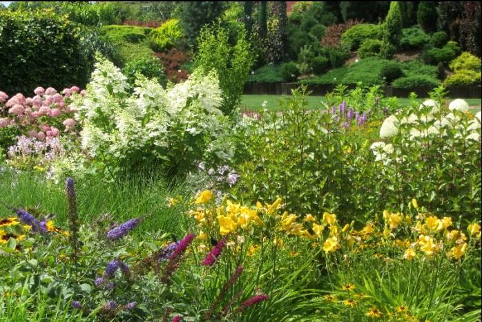 hortensja trzmielina mieczyki krwawnik w ogrodach kapias