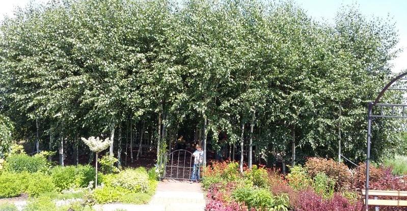 ogrody kapias - ogród w barwach narodowych i lasek brzozowy