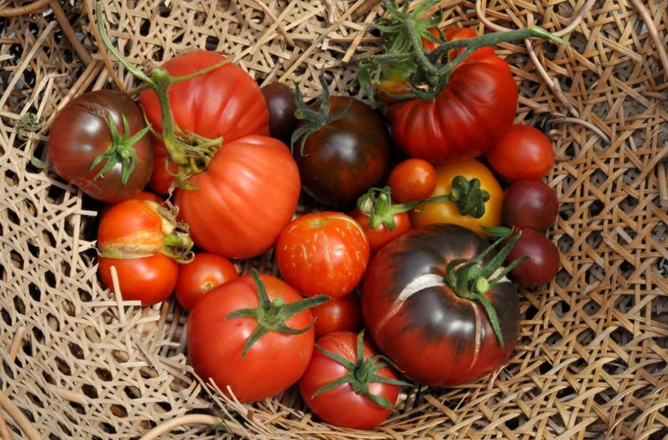 pomidor malinowy z ogrodu społecznego