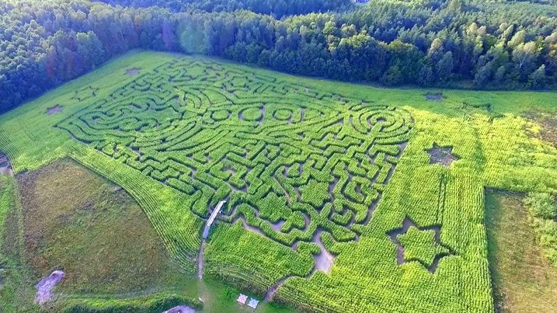 Kaszuby labirynt z kukurydzy w Blizinach , gry w zielone
