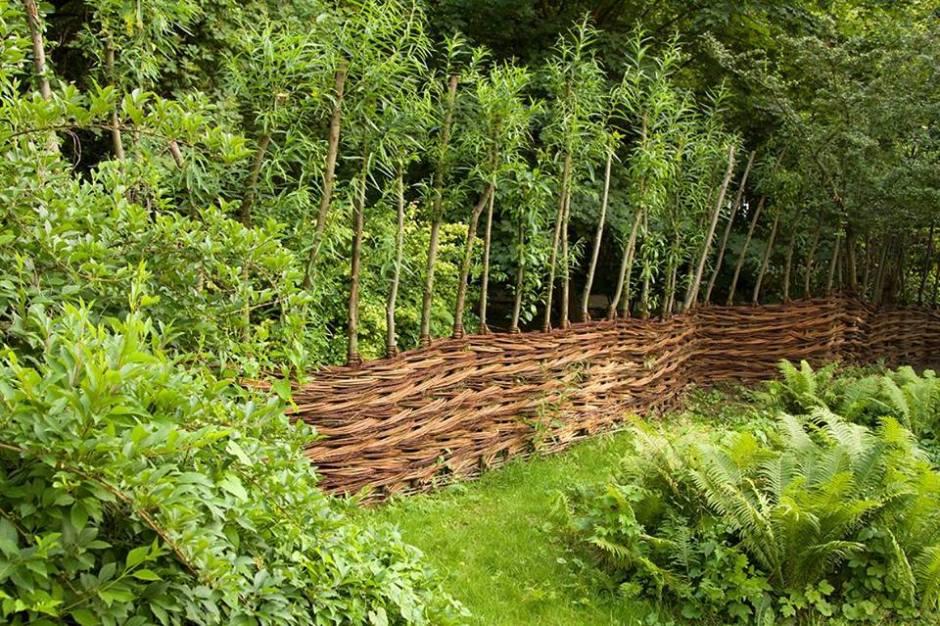 żywy wiklinowy płot okala ogród społeczny w Warszawie