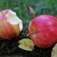 Jabłka dobre na cukier