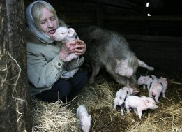 A woman plays with her pigs in the deser