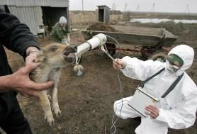 A worker of the Belarussian radiation ec