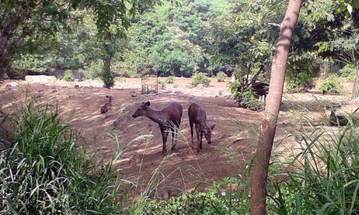 At Katraj Zoo. Pune, India