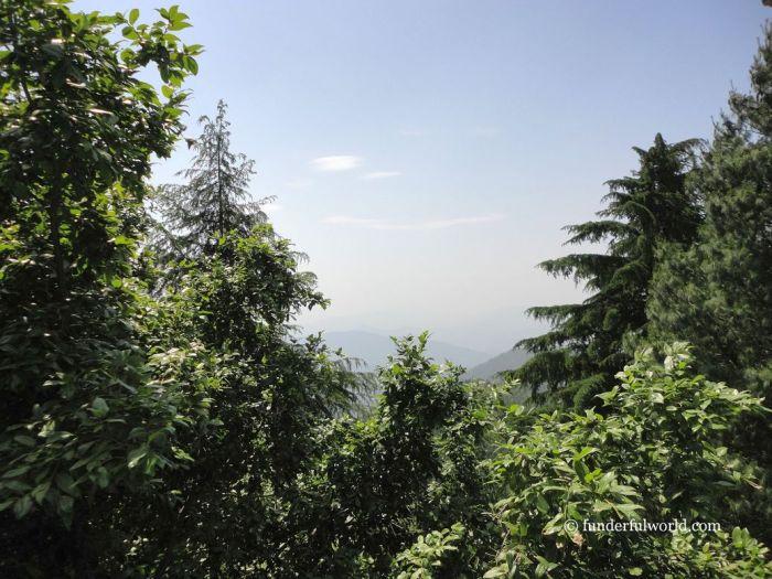 Of forests and mountains. Mukteshwar, Uttarakhand, India.