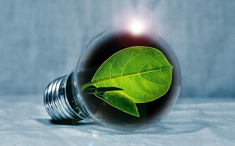 """Stop al """"Greennwashing"""", conoce los principios sólidos de la RSE"""