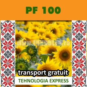 Samanta floarea-soarelui PF 100 SU
