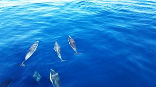 Dolphins Joining us for a Burial at Sea Service