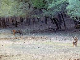 राजस्थान का रणथम्भौर नेशनल पार्क