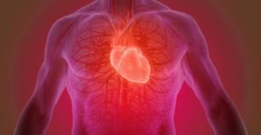दिल (ह्दय ) के बारे में 32 रोचक तथ्य | (Heart In Hindi )