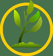 albero-cerchiato