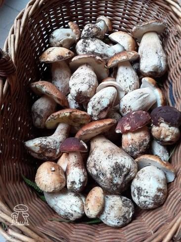 Cesto funghi Porcini