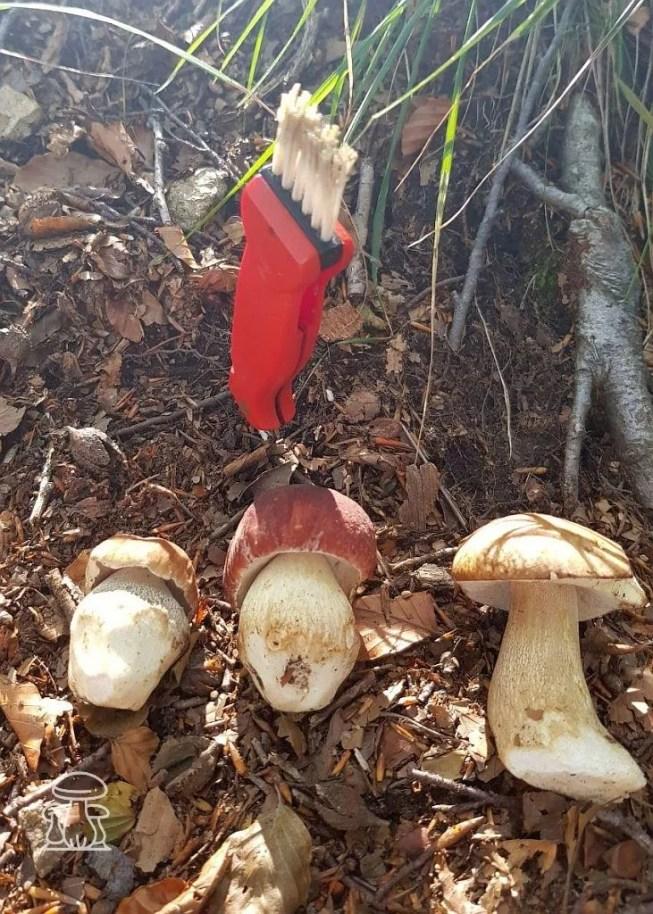 Tris di funghi Poricni