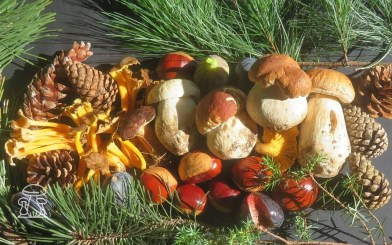 Funghi autunnali