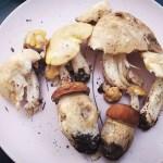 Aggiornamento funghi maggio 2020 Prugnoli e Porcini