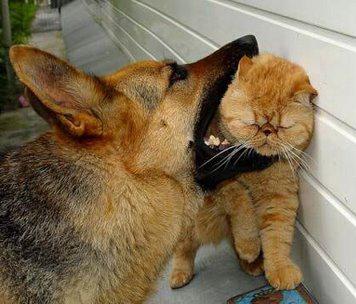 Котка от GreenPeace - камикадзе и защитник на кучетата