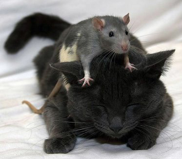 Котка - пацифист и вегетарианец