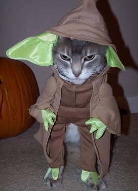 Котка, която се прави на Йода