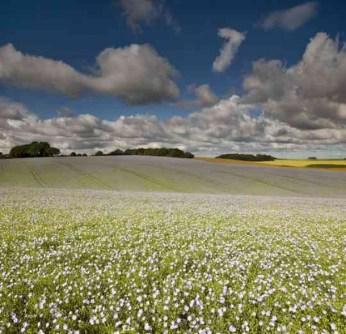 Фотография поле и небе