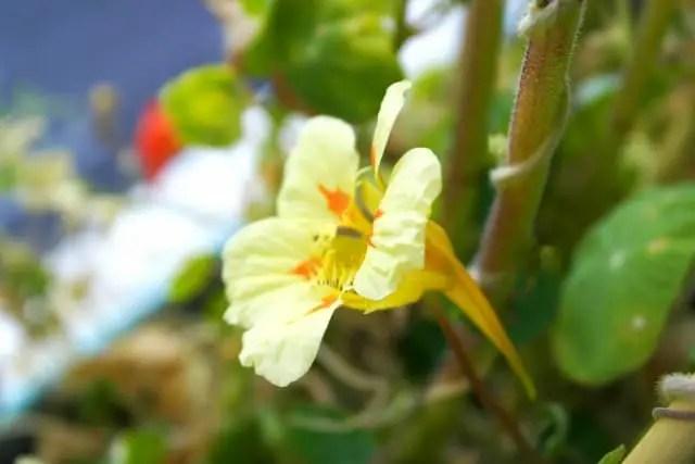 Blumenwichteln 2013