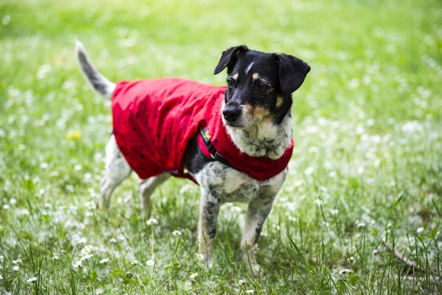 Diy Regenmantel für Hunde