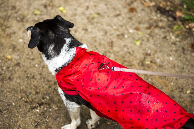 Upcycling Regenmantel für Hunde