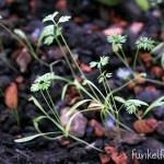 Blumenwichteln – Zeigt her eure Pflanzen