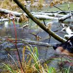 Winterspaziergang an den Eichwerder Moorwiesen