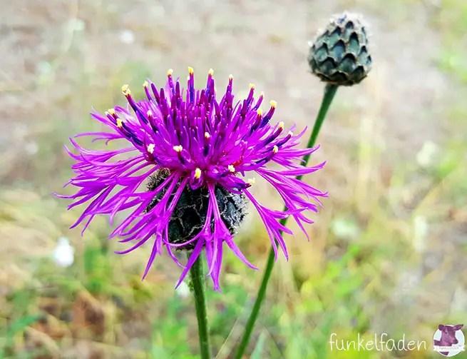 Blumen im Gleisdreieckpark
