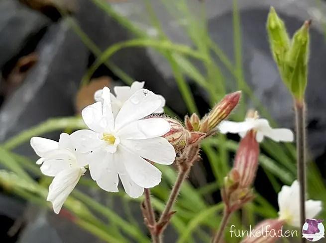 Weiße Blume im Park in Kreuzberg