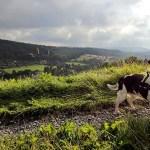Spaziergänge durch Wald und Moor im Weserbergland