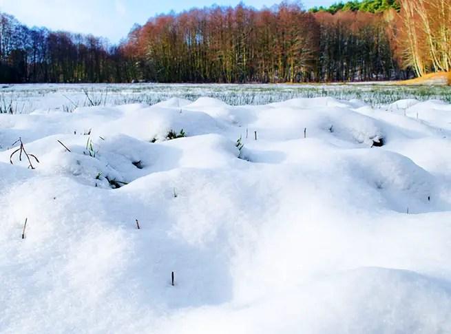 Schnee im Fläming in Brandenburg