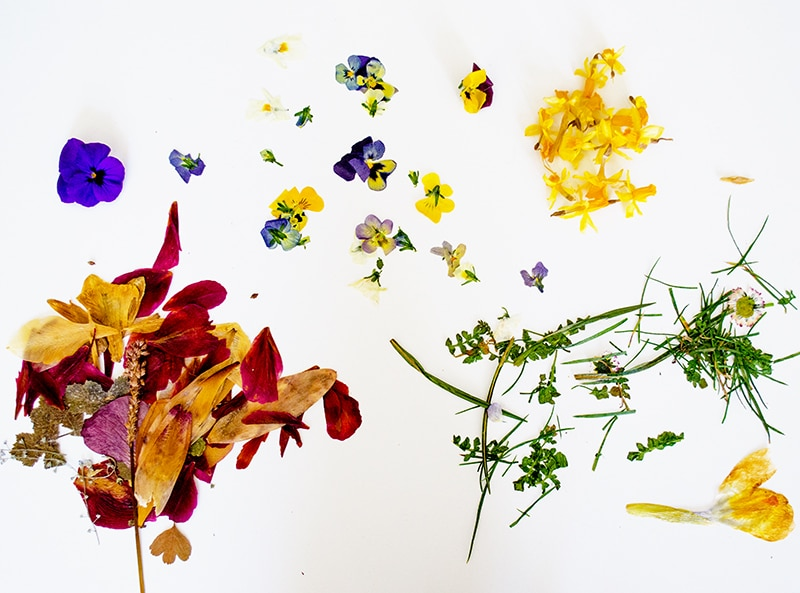 DIY Anleitung - Lesezeichen mit getrockneten Blumen basteln