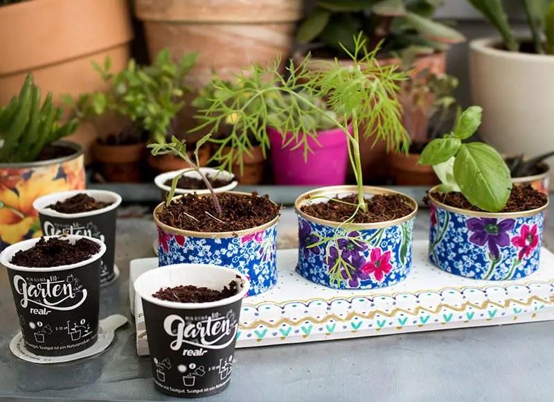 real - Mein kleiner Bio-Garten