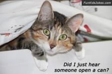 cat-open-can-joke