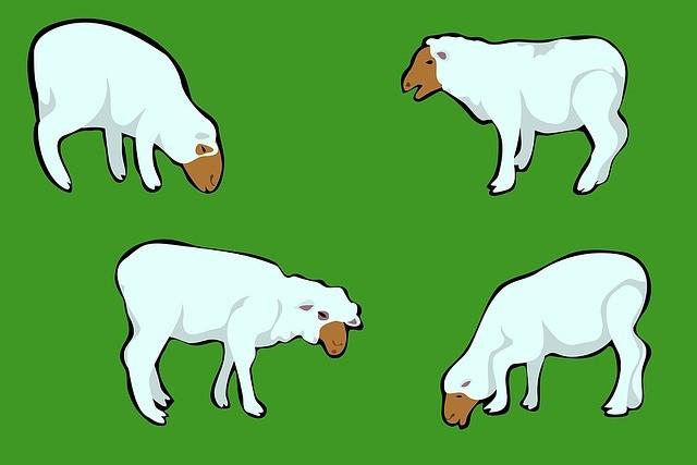 Funny sheep jokes - photo#45