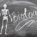 Biology Jokes for Teachers, Kids and Biologists