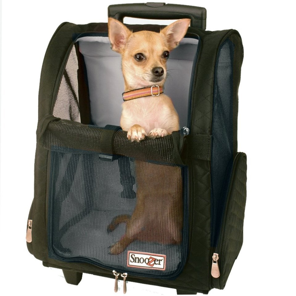 the best travel pet carrier ever -- wheeled pet carrier chihuahua