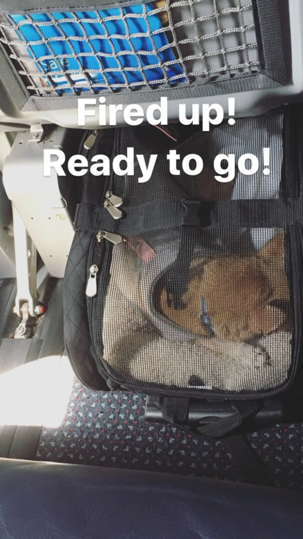 the best travel pet carrier ever -- Under the aisle seat.