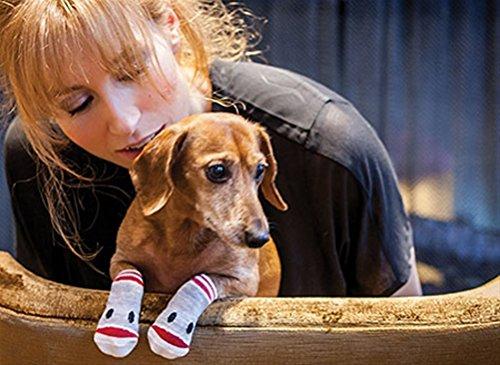 sock monkey dog socks
