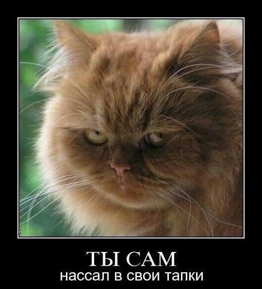 Смешные картинки котов с надписями — подборка за Июль (15 ...