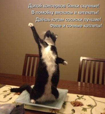 Короткие стихи про кошек в картинках